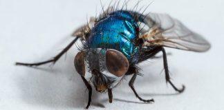 Διώξε τις μύγες από το δωμάτιο