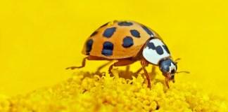 Τι σημαίνει η λέξη 'έντομο';
