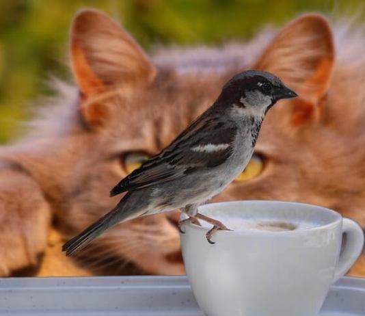 Το πουλί θα το σκοτώσει το γατί