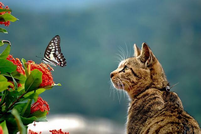 02e63048c08b Για να μη τρώει η γάτα τα φυτά μέσα στο σπίτι Mea-Colpa Κάθε Μέρα ...