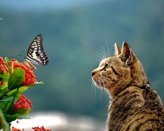 Για να μη πηγαίνει η γάτα στα φυτά