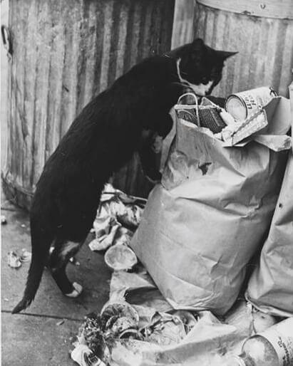 Οι γάτες, το Αζαξ και τα σκουπίδια