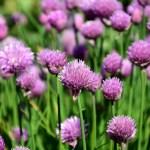 Ζαρζαβατικά και αρωματικά βότανα