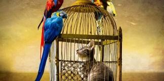 Η γάτα στο κλουβί