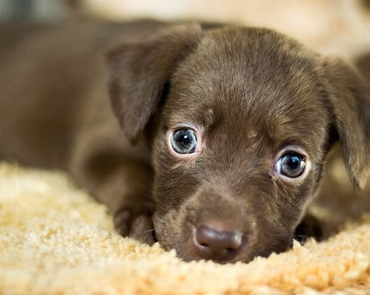 Μυρίζει η ανάσα του σκύλου;