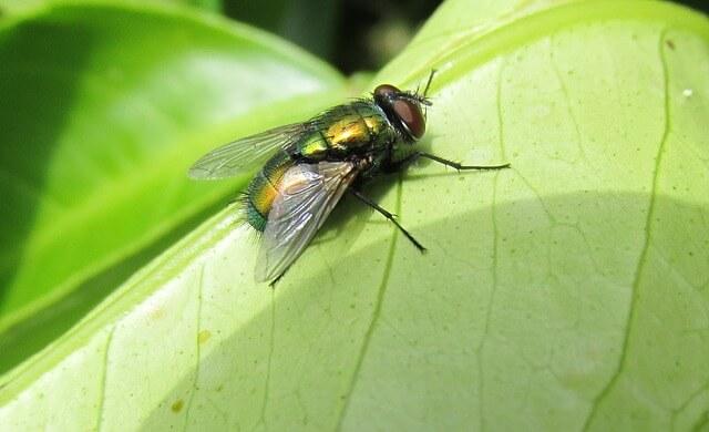 Αν οι μύγες λερώσουν τα τζάμια