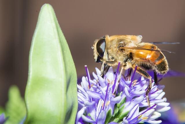 Σας τσίμπησε μέλισσα ή σφήκα;