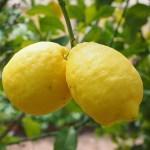 Κόλπο για τα ξεραμένα λεμόνια
