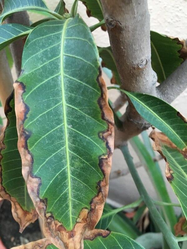 Φυτά με φύλλα σαν καμένα