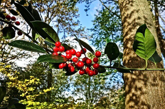 Για τα παράσιτα στο δέντρο, θα φτιάξεις οικολογικό εντομοκτόνο