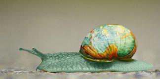 Εξαφάνισε τα σαλιγκάρια από την αποθήκη