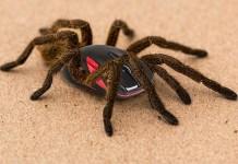 Οι αράχνες και πως θα τις απωθήσεις