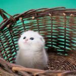 Η γάτα που ανακουφίζεται;