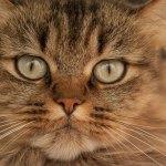 cat-2783459_640 (1)