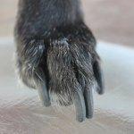 Τα νύχια του σκύλου τα κόβεις;
