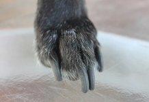 Τα νύχια του σκύλου πως τα κόβεις;