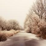 frozen-2898564_640