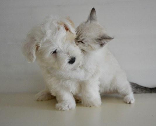Ξύνει το αυτί το σκυλί ή το γατί;