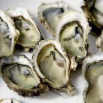 oyster-1522835_640 (1)