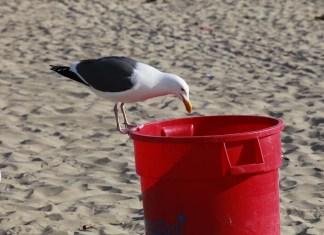 Τι συμβαίνει με τα σκουπίδια στη θάλασσα