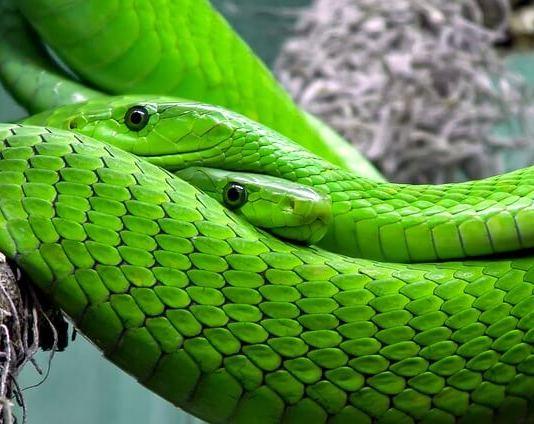Φίδι στο κτήμα;