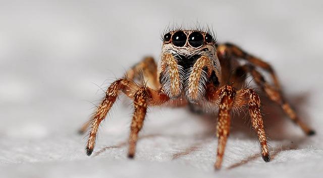 Ετσι διώχνουμε τις αράχνες