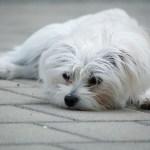 dog-1481265_640