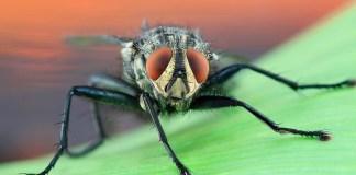 Αν σας ζάλισαν οι μύγες