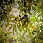 Τι είναι τα αειθαλή φυτά;