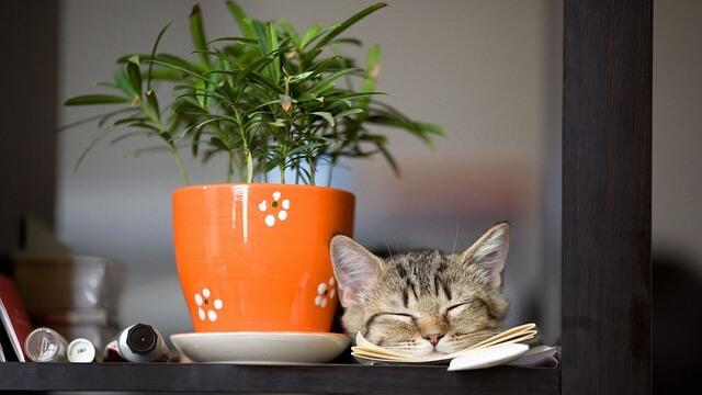 Για να μη πηγαίνει το γατάκι στα φυτά
