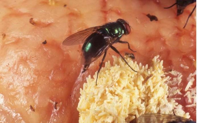 Θα πάθετε πλάκα όταν μάθετε αυτό για τις μύγες