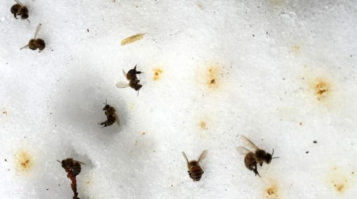 Περιττώματα μύγας