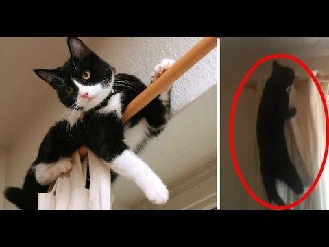 Εχετε γάτα που σκαρφαλώνει στις κουρτίνες;
