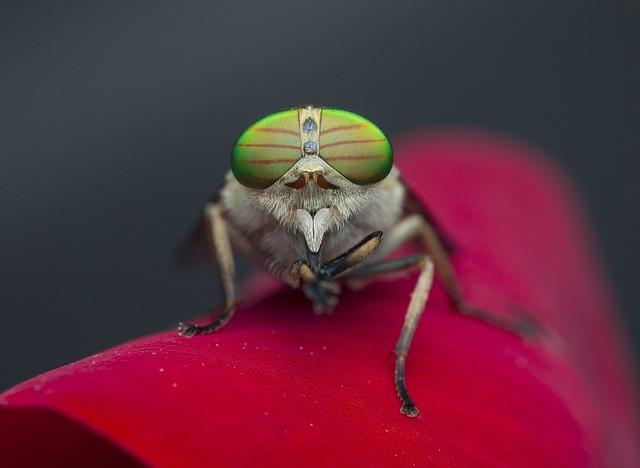 Οι μύγες δεν ταξιδεύουν