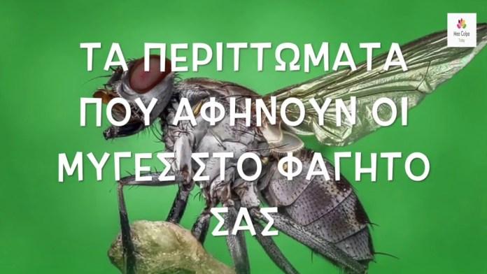 ΠΡΟΣΟΧΗ στις μύγες που πάνε στα τρόφιμα! Δείτε γιατί!