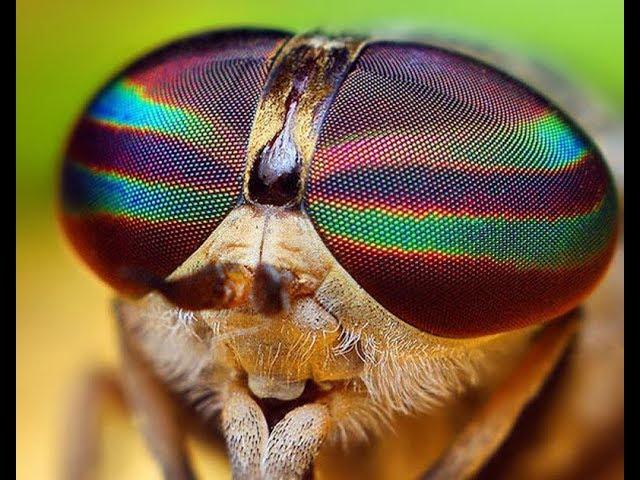 Τα παράξενα μάτια της μύγας