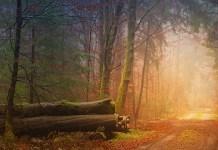 Αν πας στο δάσος και χαθείς