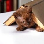 Για να μη πηγαίνει η γάτα στη γλάστρα