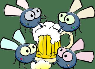 Οι μύγες πλένονται ασταμάτητα