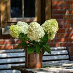 Διατηρούμε τα λουλούδια στο βάζο