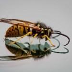 Πως θα απαλλαγείτε από τις σφήκες χωρίς τοξικά απωθητικά