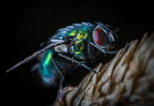 Πως θα καθαρίσεις τα περιττώματα της μύγας