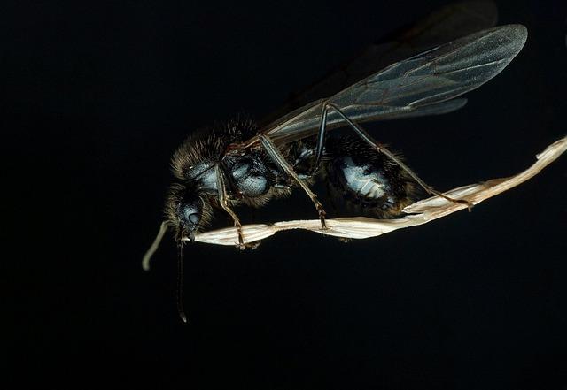 Αν ήξερες τι υπάρχει στα πόδια της μύγας …