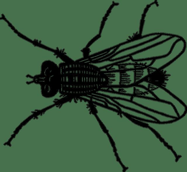 Αυτό για τις μύγες το ξέρεις;