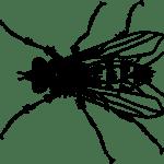 Αυτό για τις μύγες, το ξέρεις;
