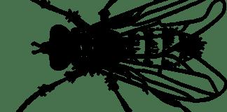 Το ξέρεις αυτό για τις μύγες;