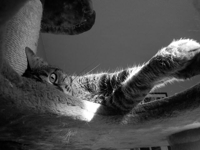 Για να μη γρατζουνάει η γάτα τον καναπέ