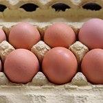 Αυτό για το αβγό, το ξέρεις