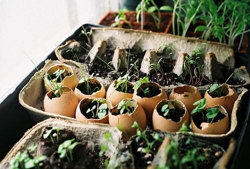 Το πεπόνι, το αβγό και η κηπουρική