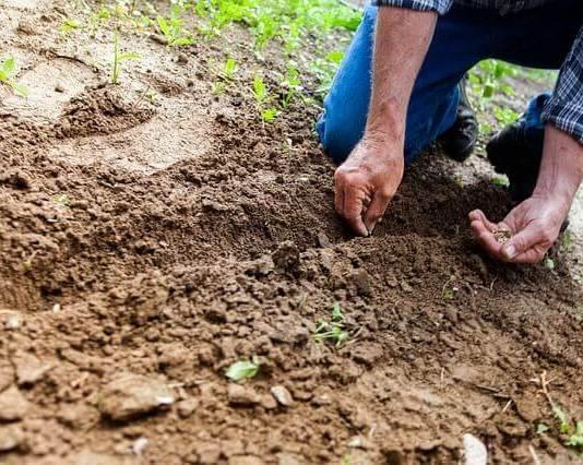 Θυμήσου το κόλπο, αν φυτέψεις σπόρους